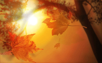 Autumn screenshot 9