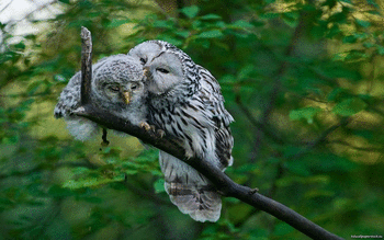 Barred Owl screenshot 13