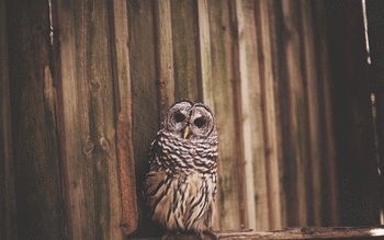 Barred Owl screenshot 18