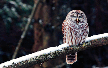 Barred Owl screenshot 2