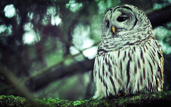 Barred Owl screenshot 5