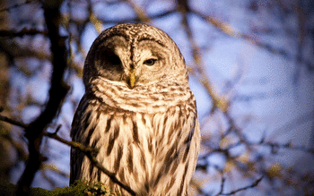Barred Owl screenshot 7