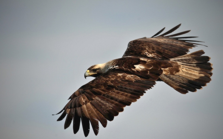 eagle free download for windows