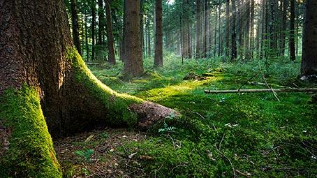 Forest Floors Theme for Windows 7