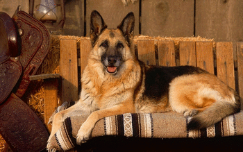 German Shepherd screenshot 13