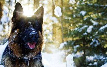 German Shepherd screenshot 14