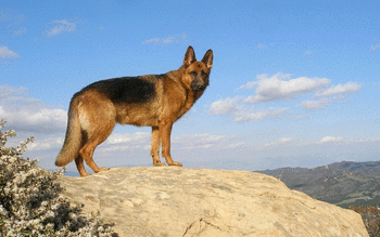 German Shepherd screenshot 16