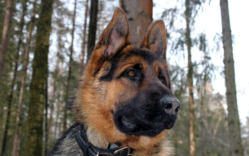 German Shepherd screenshot 17