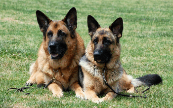 German Shepherd screenshot 19