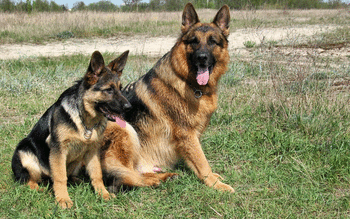 German Shepherd screenshot 20