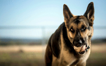 German Shepherd screenshot 28