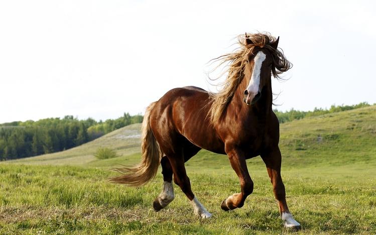 Horse Theme for Windows 10