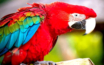 Macaw screenshot 10