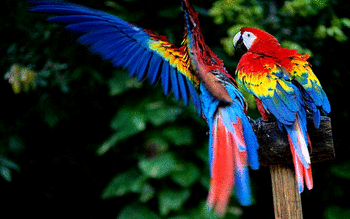 Macaw screenshot 11