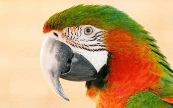 Macaw screenshot 14