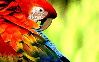 Macaw screenshot 16