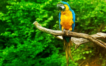 Macaw screenshot 17