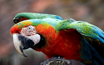 Macaw screenshot 3