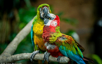 Macaw screenshot 6