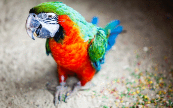 Macaw screenshot 7