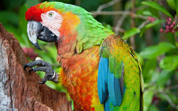 Macaw screenshot 8