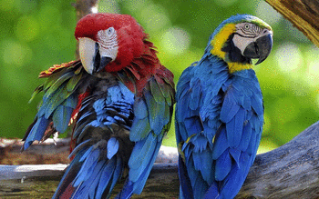 Macaw screenshot 9