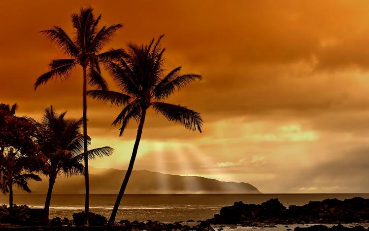 Palm Tree Theme for Windows 10