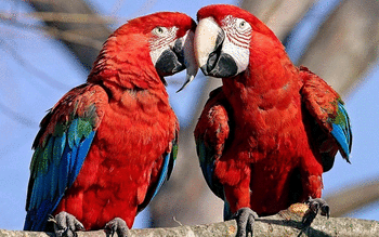Red And Green Macaw screenshot 11