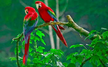 Red And Green Macaw screenshot 12