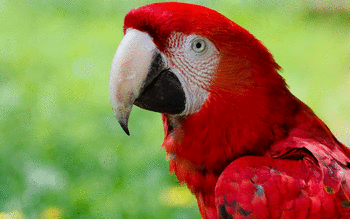 Red And Green Macaw screenshot 13