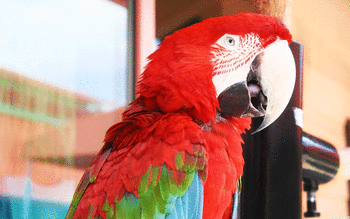 Red And Green Macaw screenshot 14