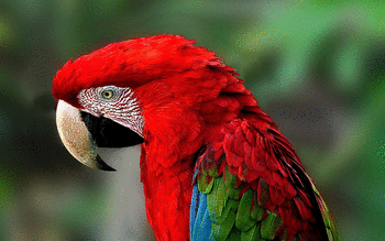Red And Green Macaw screenshot 15