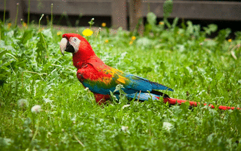Red And Green Macaw screenshot 2
