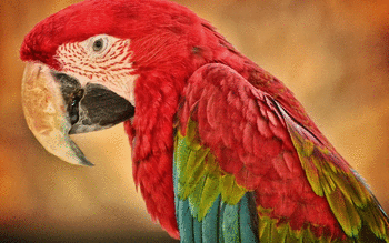 Red And Green Macaw screenshot 3