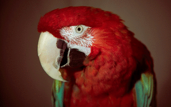 Red And Green Macaw screenshot 5