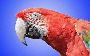 Red And Green Macaw screenshot 6
