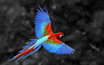 Red And Green Macaw screenshot 7