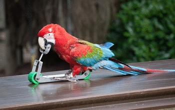 Red And Green Macaw screenshot 8