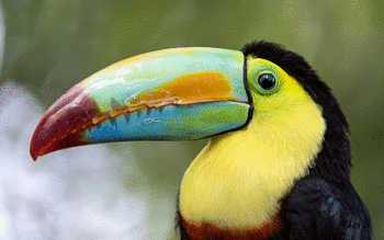Toucan screenshot 15