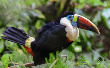 Toucan screenshot 16