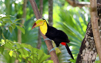 Toucan screenshot 5