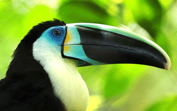 Toucan screenshot 6