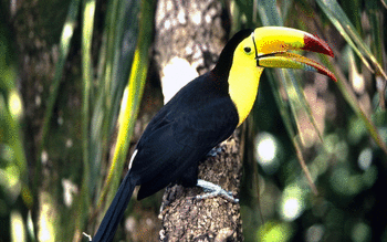 Toucan screenshot 7