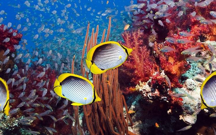 star 387_Tropical Fish Theme for Windows 10