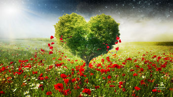 Green Love Heart Tree Poppies wallpaper preview