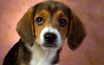 Puppy Eyes, Beagle screenshot